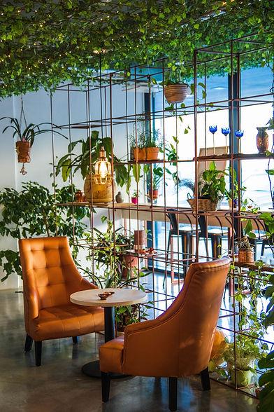 Café avec des plantes