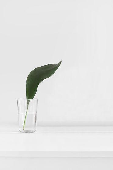 Leaf in Glass