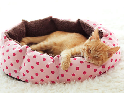 Kitten Sleeping in Pet Bed