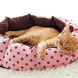 ペットベッドで寝ている子猫