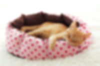 Kitten Sleeping in huisdier bed