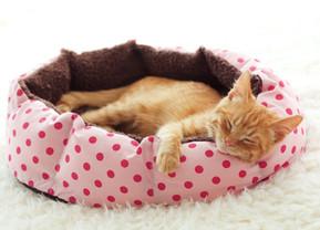 วิเคราะห์ตลาดสัตว์เลี้ยงส่งท้ายปี สินค้าอะไรน่าเอามาขาย ได้กำไร ไม่จมทุน (1-กลุ่มแมว)