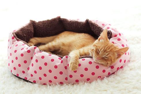 Kociak śpi w łóżku dla zwierząt