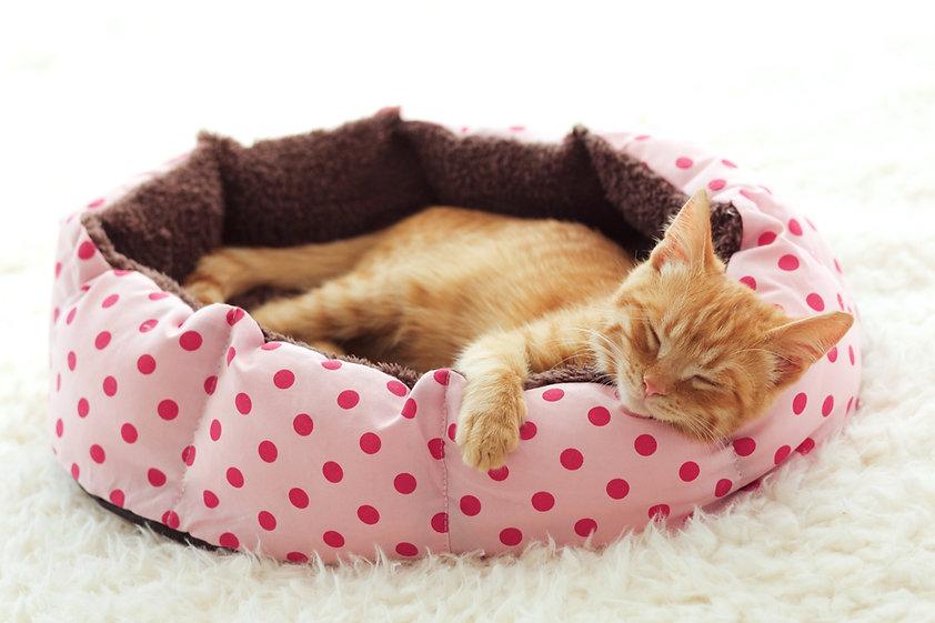 Gatito durmiendo en la cama para mascotas