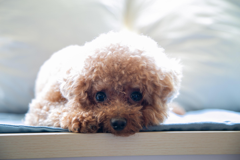 Basic Groom for dogs under 20kgs.