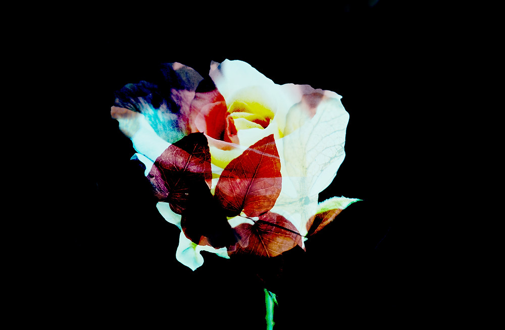 Beautiful Negative Photo of a Flower