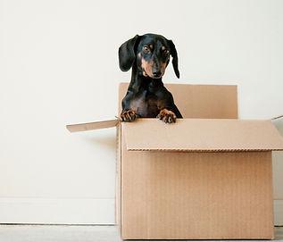 Bir kutu içinde köpek