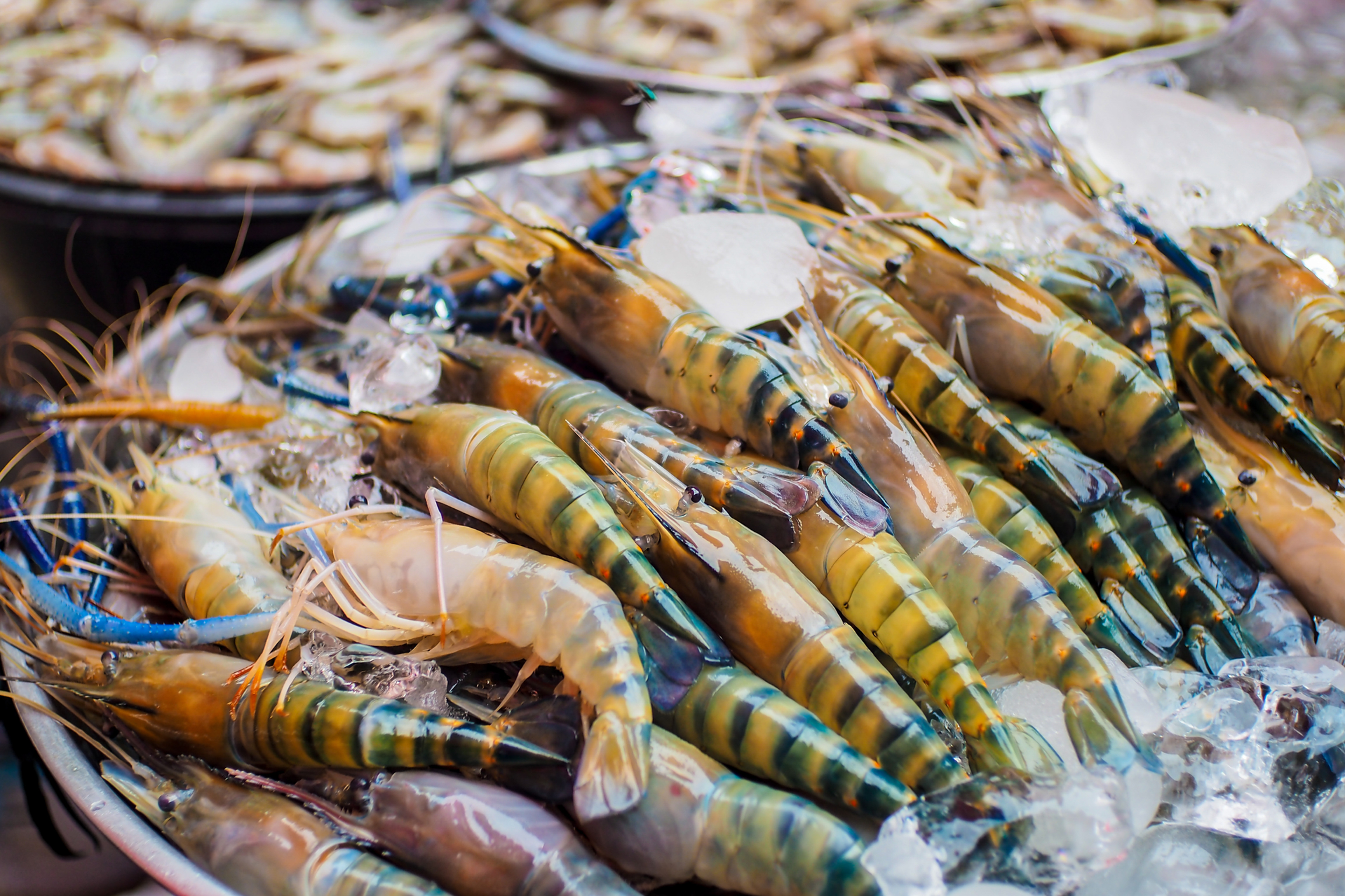 Shellfish Allergy Panel