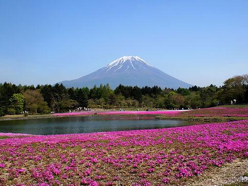 富士山麓の花畑