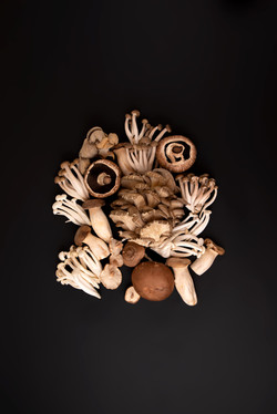 A Mushroom Experience In Berceto