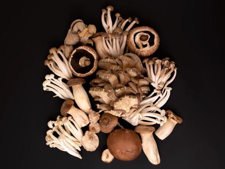 Roasted mushroom + walnut spread