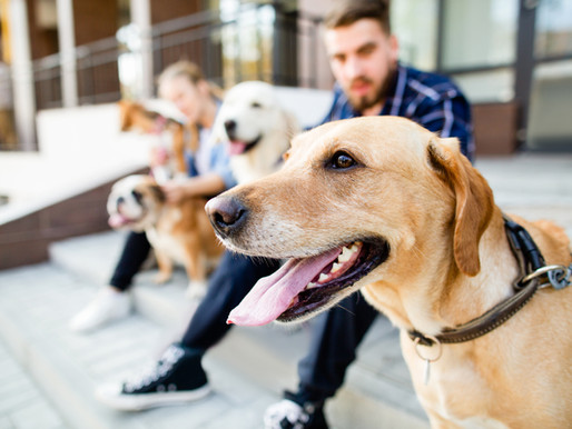 TIPS FOR CHOOSING THE RIGHT DOG BREED