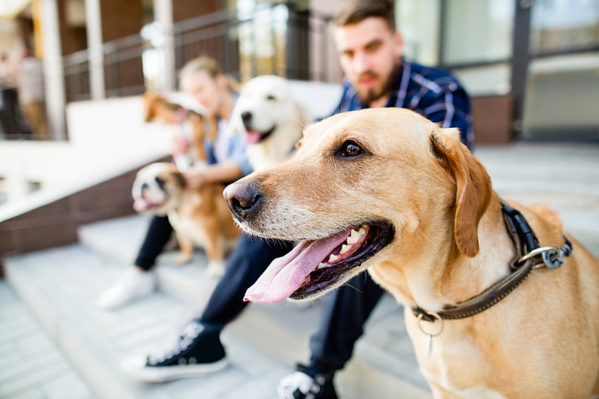 Dog Walking Jobs Birmingham