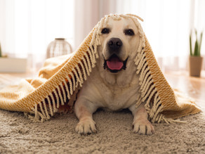 Home sweet Home Top tips for making sure your home is an appropriate & safe environment for your pet