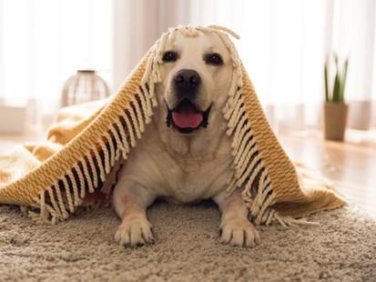 häkitön koirahoitola Metsoniemi