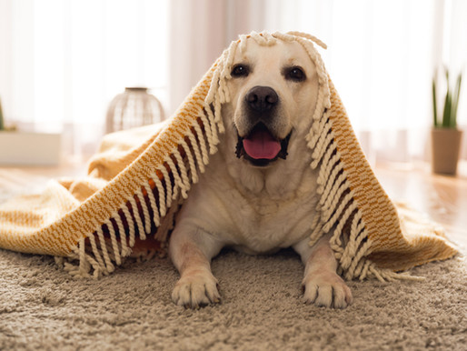 How to Keep Your Dogs Active Indoors - Roxys Guide
