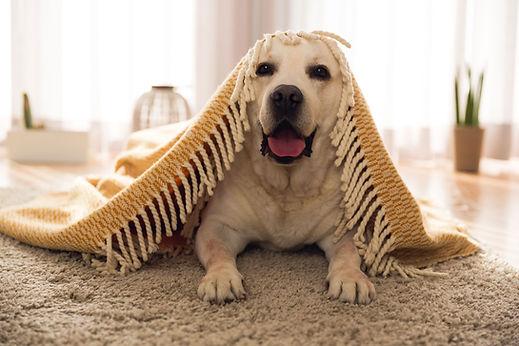Cachorro fofinho