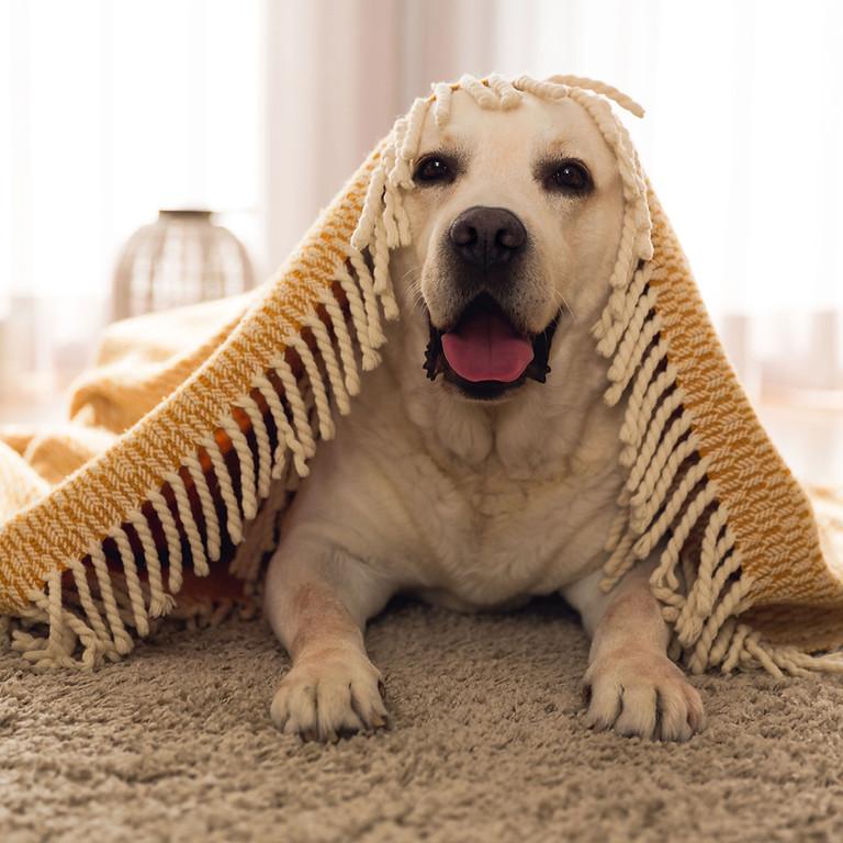 Hundmassage för hemmabruk- Online