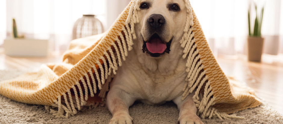 10 tips for moving with your pets