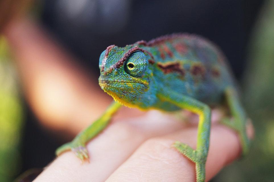 Reptile Still