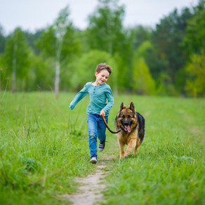 Iwans PAWS Charity dog walk for Haworth RDA.