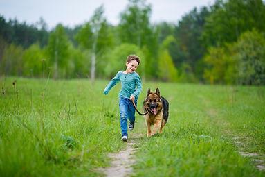 Dog Pulls on Leash Encino Tarzana