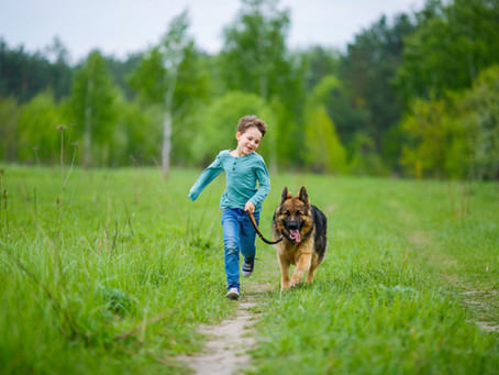 Happy International Dog Walking Month!