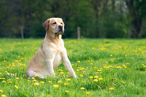 Grasmilben beim Hund - was tun?