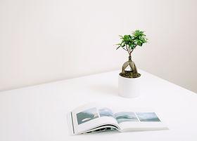 Pflanze und Buch
