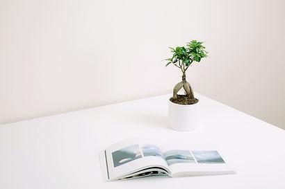 Planta e livro