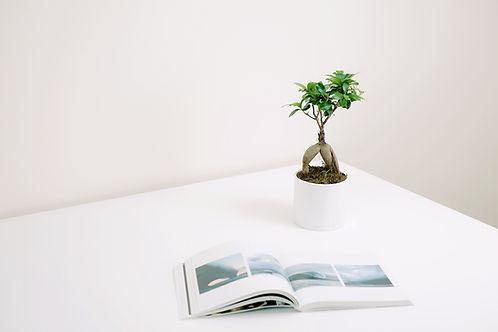 Bitki ve Kitap