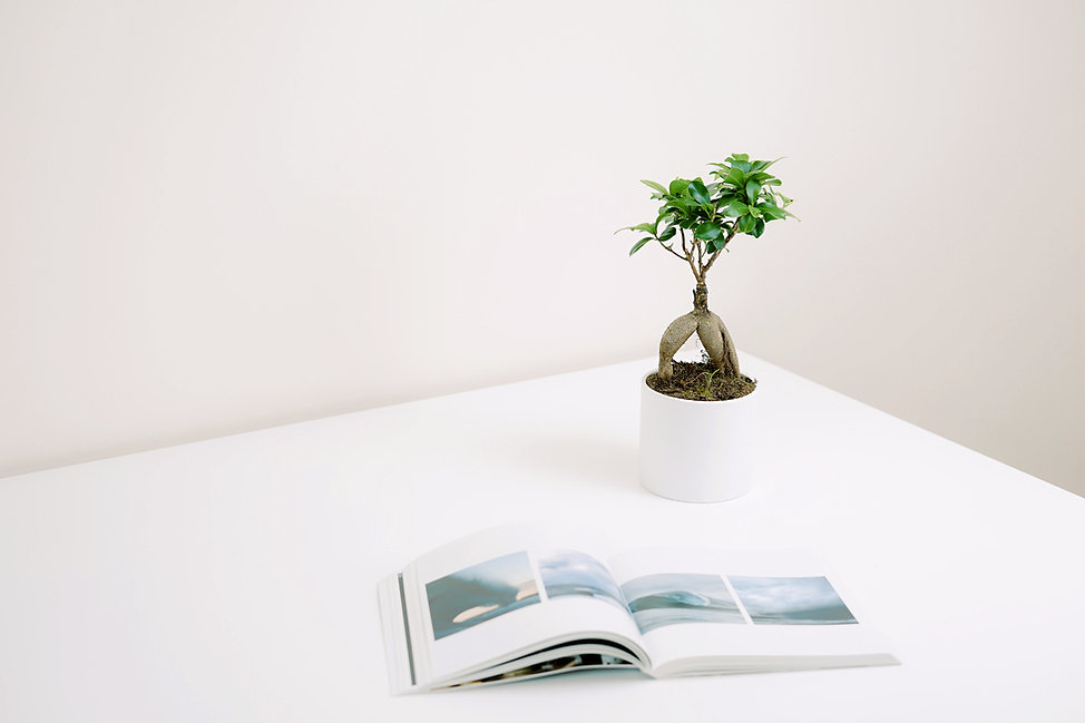 Plante et livre