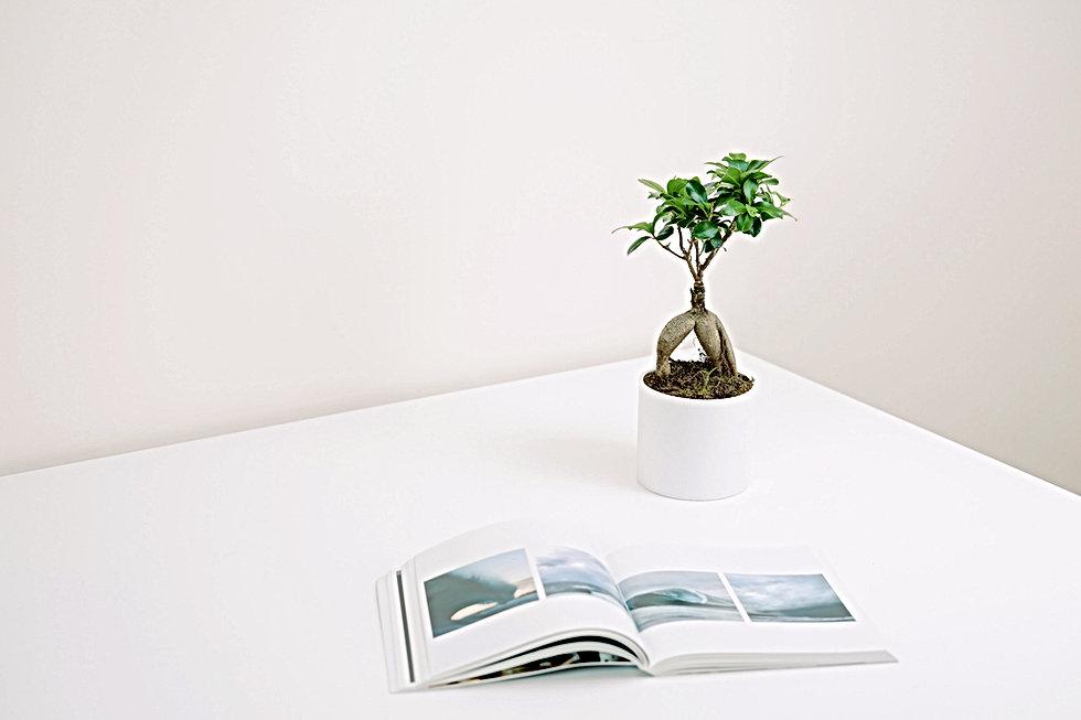 Plant en boek