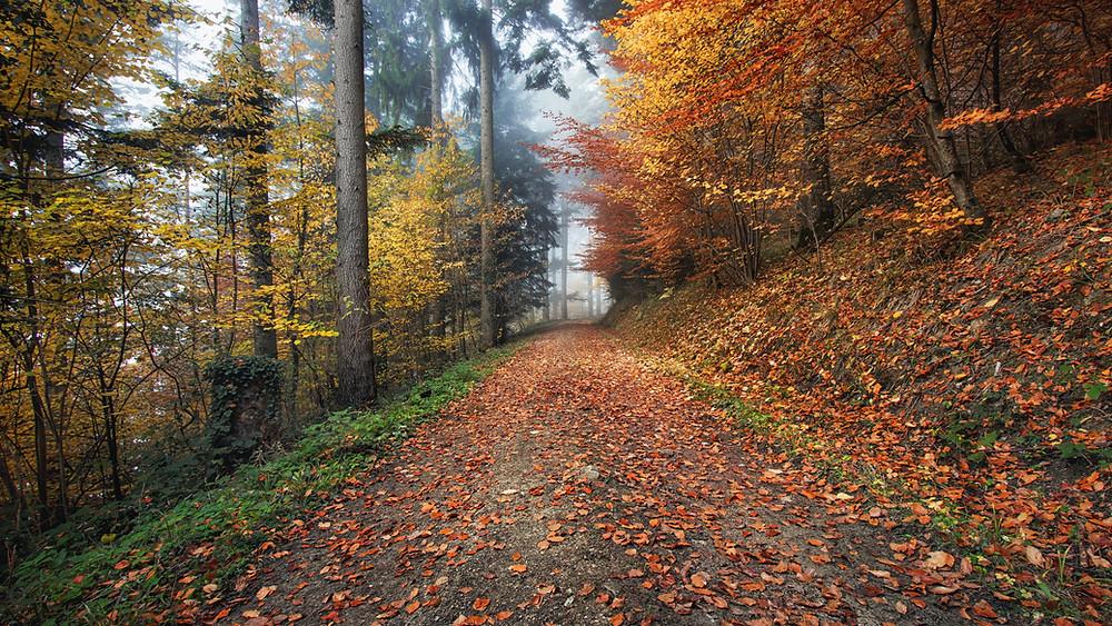 Straße im Wald mit Blättern bedeckt