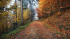 Autumn's Golden Touch