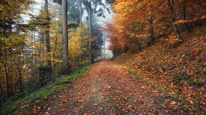 Farbenfrohen Wald im Herbst, www.fewo-dewes.com