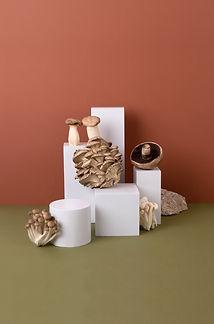 Funghi sui palchi