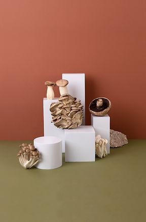 Mushrooms on Stages