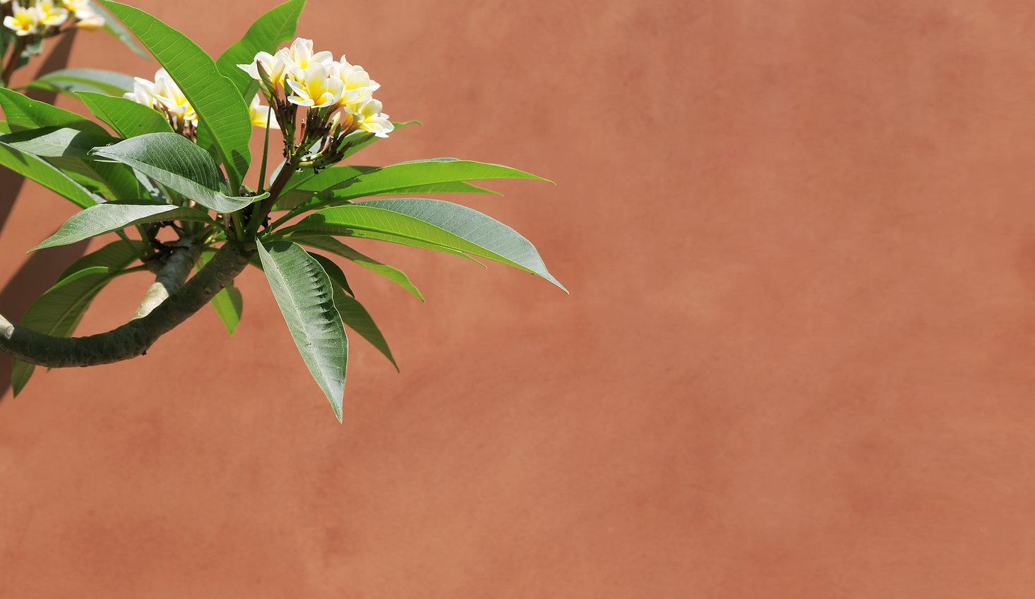 tropische Blume