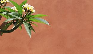 Tropical Flower