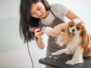 Dog Grooming Student, here's what equipment you need.