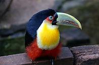 Pássaro exótico