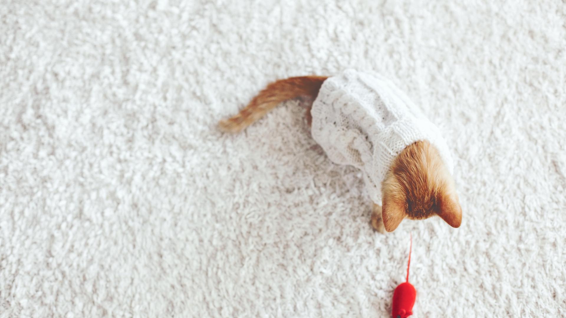 Kätzchen, das mit Toy Mouse spielt