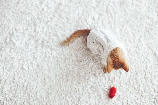 Chaton jouant avec une souris jouet