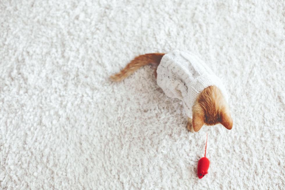 Котенок играет с игрушечной мышкой