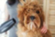 Hondenblazer