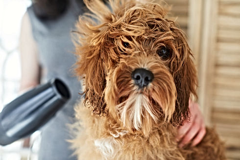 Dog Blower