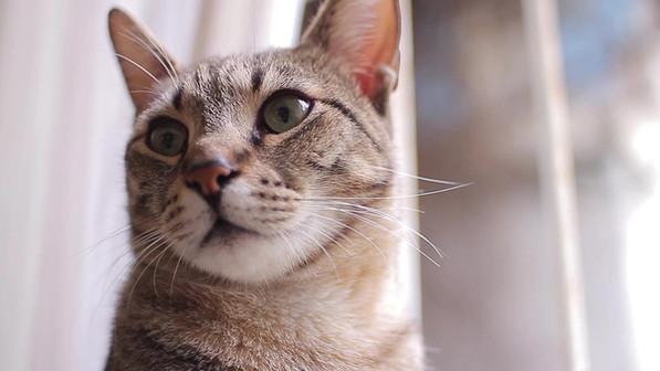 Cat Odors