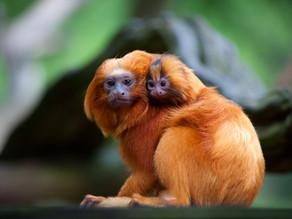 May '21 Newsletter - Saving Wild Species