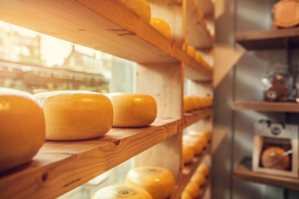 cheese making workshop at Riverside in July